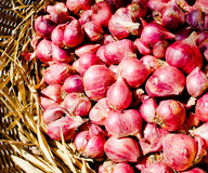 Thai Red Shallot or Onion of Chiangmai. Stock Photography