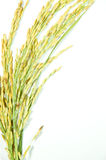 Thai rice. On white background Royalty Free Stock Photography