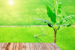 Thai rice field with wood plank Stock Image