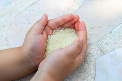 Thai rice and little hand. Boy Royalty Free Stock Photos