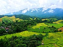Thai Rice Paddy Field. Rice Paddy Field in Thailand Stock Image