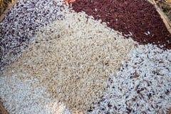 Thai rice varieties of brown rice, mixed wild rice, white rice Stock Image
