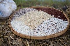 Thai rice varieties of brown rice, mixed wild rice, white rice Royalty Free Stock Photo