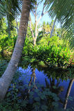 Thai rural atmosphere with a small ditch,coconut trees,lotus and other tropical plants. Royalty Free Stock Image