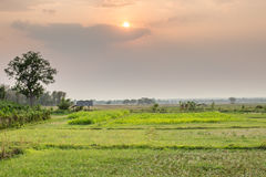 Thai rural empty rice field landscape. With sunset sky royalty free stock image