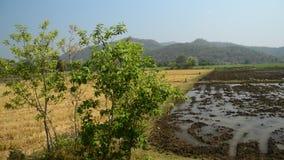 Thai rural view stock video
