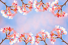 Thai sakura branch frame Stock Photography
