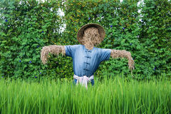 Thai scarecrow in the rice field stock images