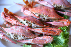 Thai seafood, steamed crab Stock Photography