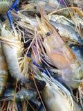 Thai shrimp Royalty Free Stock Images