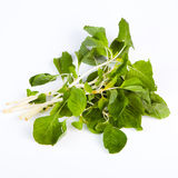 Thai Spinach. (Pakkom)isolate on white background Royalty Free Stock Image