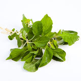 Thai Spinach. (Pakkom)isolate on white background Royalty Free Stock Photography