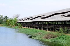 Thai stlye commercial layer farm Royalty Free Stock Images