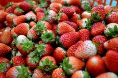 Thai strawberry Fruit of Doi Inthanon. Royalty Free Stock Image