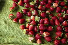 Thai strawberry. On green fabric in sunlight Royalty Free Stock Image