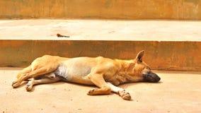 Thai stray dog sleeping on cement floor Royalty Free Stock Image