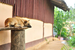 Thai stray dog sleeping on chair Stock Photography