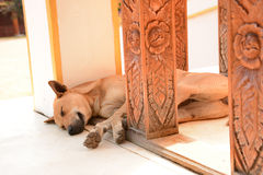 Thai stray dog sleeping on the floor. Thai stray dog sleeping on the temple terrace floor with the flower and leaf pattern wood carving baluster stock photo