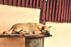 Thai stray dog sleeping om chair Royalty Free Stock Photo