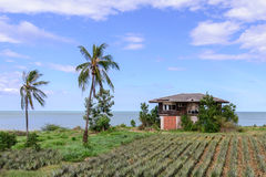 Thai style abandoned house seaside with pineapple field.  stock photography