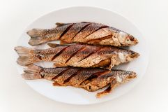 Thai style deep fried Mullet fishes on white plate and white table royalty free stock photos