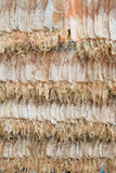 Thai style dried squid Royalty Free Stock Photo