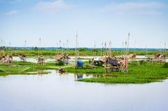 Thai style fishing trap in lake, Net Fishing Thailand, Thailand Shrimp Fishing, Northern East , Thailand. Stock Image