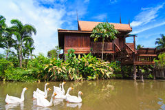 Thai style house and swan Royalty Free Stock Photography