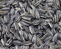 Thai sunflower seeds background. Of ingredient Royalty Free Stock Photo