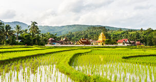 Thai temple and field. Thai temple and green field foreground Stock Images