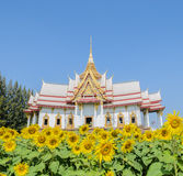 Thai temple with sunflower field Stock Images