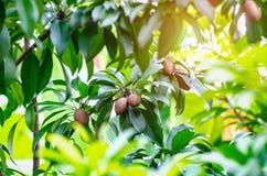 Thai tender fruit stock images
