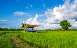 Thai traditional hut Royalty Free Stock Photography