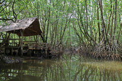Thai traditional pavilion by the canal in mangrove forest, Trat Province Royalty Free Stock Photo