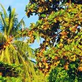 Thai Tree Branch Royalty Free Stock Photo