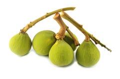 Thai tropical fruit (santol) Stock Photos