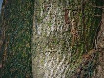 Thai utomhus- thailangträdgård för träd Royaltyfri Fotografi