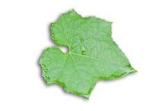 Thai vegetable leaf Stock Image