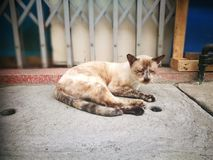 Wild street cat royalty free stock photography
