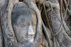 thai wat för buddha staty Arkivfoto