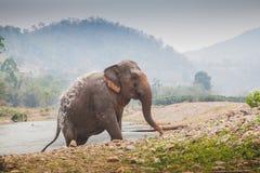 Thai wild elephant exits river stock image