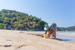 Thai woman digs up mussels on the beach. Thong Nai Pan Yai, Koh Pangan, Thailand, April 26, 2016 , Thai woman digs up mussles on the beach  and collects them in Royalty Free Stock Photos