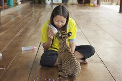 Thai woman feeds baby tiger with milk in Saiyok, Thailand. Stock Photos
