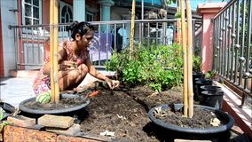 Thai woman gardening at vegetable garden in House stock video