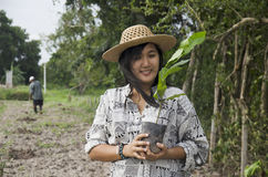 Thai woman planting tree and growing vegetable drop in hole at g Stock Images