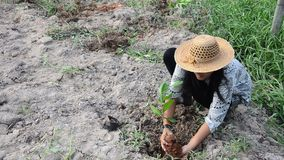 Thai woman planting tree and growing vegetable drop in hole at garden. In dusk time in Phatthalung, Thailand stock footage