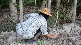 Thai woman planting tree and growing vegetable drop in hole at garden stock video