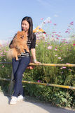Thai woman and pomeranian with turbine in cosmos field, Muangkaen stock images
