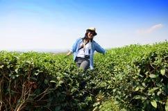 Thai woman portrait on tea plantation at Doi Mae Salong (Mountain) in Chiang Rai Stock Photos