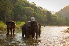 Thai Woman In Traditional Costume. Of Thailand and elephant stock photos